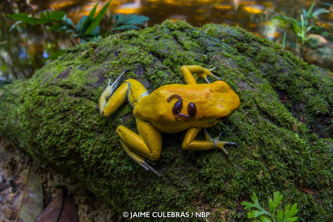 15-frog-windland-awards-photography-by-jaime-culebras