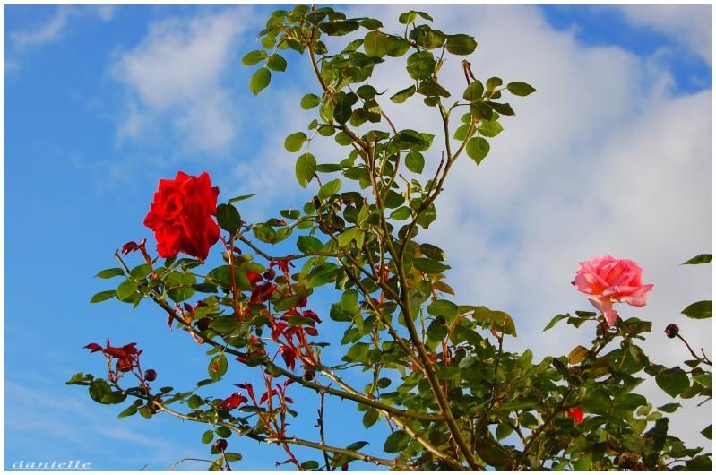 photos-fleurs-0385.JPG