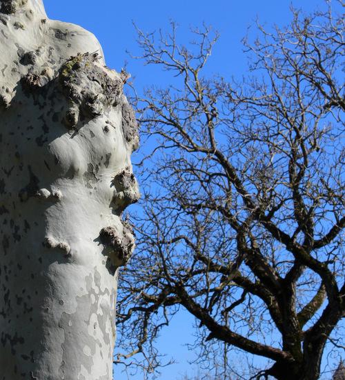 Des arbres habités