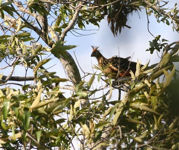 un bel oiseau caché dans les branches;