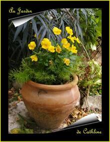 Jardiner avec la lune  Du 1er au 10 Décembre