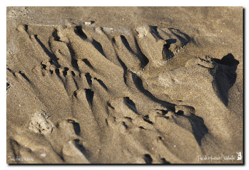 Infos du Mercredi 16 décembre 2015 - Au ras du sable
