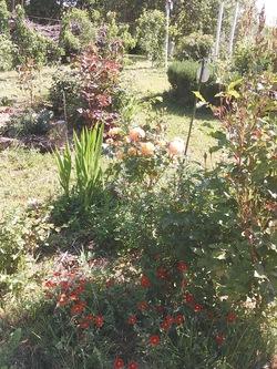 rétro jardin 2019