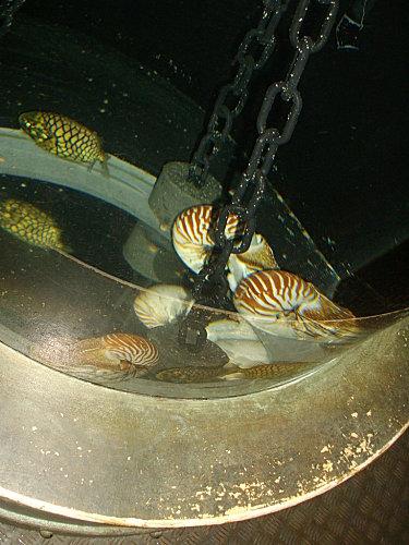 aquarium-piratesvernis-098.JPG