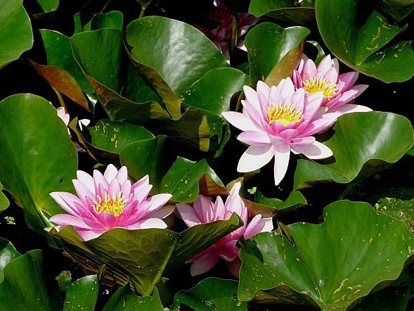 fleurs1.06-149.JPG
