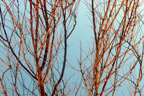 Feuilles et branches au soleil