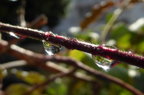 Il pleut sur le jardin d'ANNE