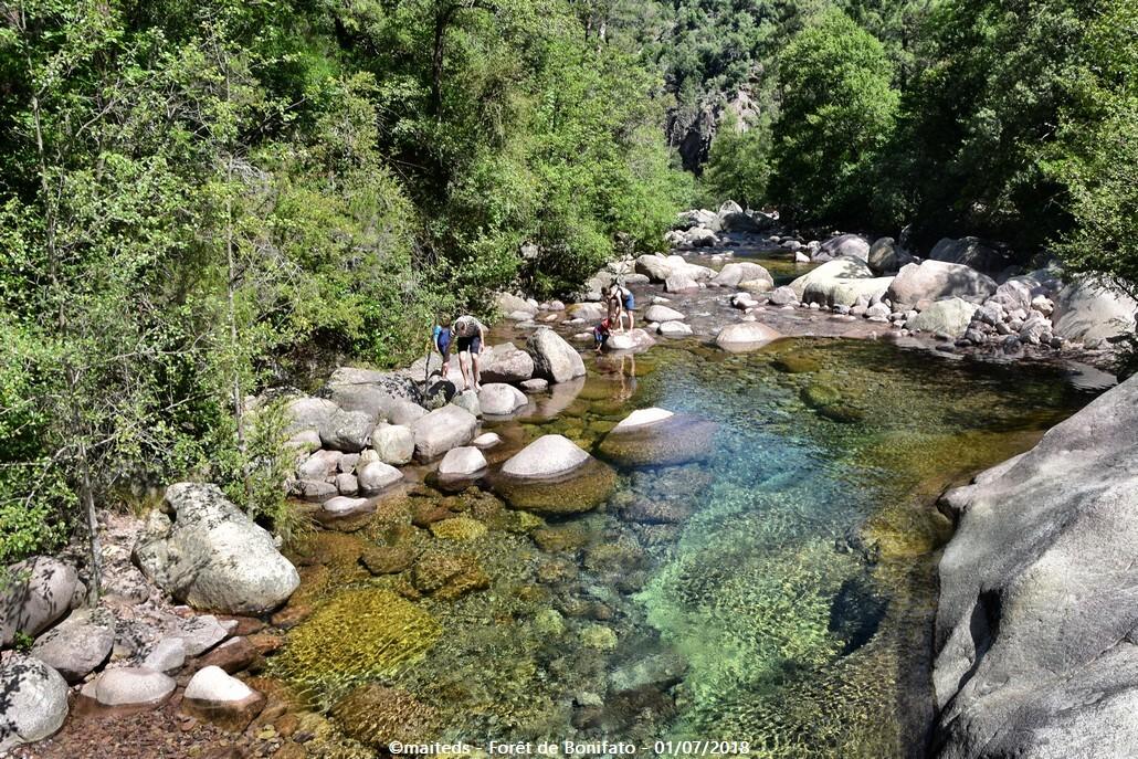 La Figarella - Forêt de Bonifato - Corse