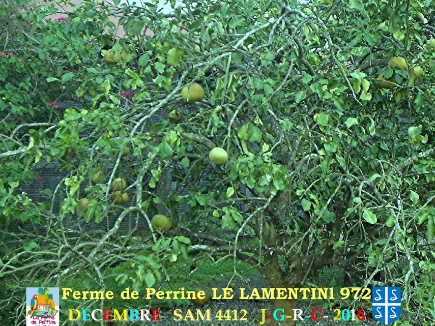 PARC DE MARTINIQUE: la ferme Pérrine  4/4       D    20/08/2017