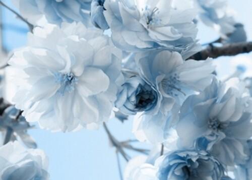 Fonds fleuries