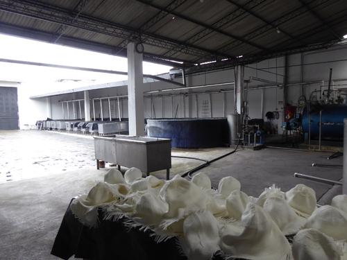 """10 ème jour, visite d'une fabrication de """"Panamas"""""""