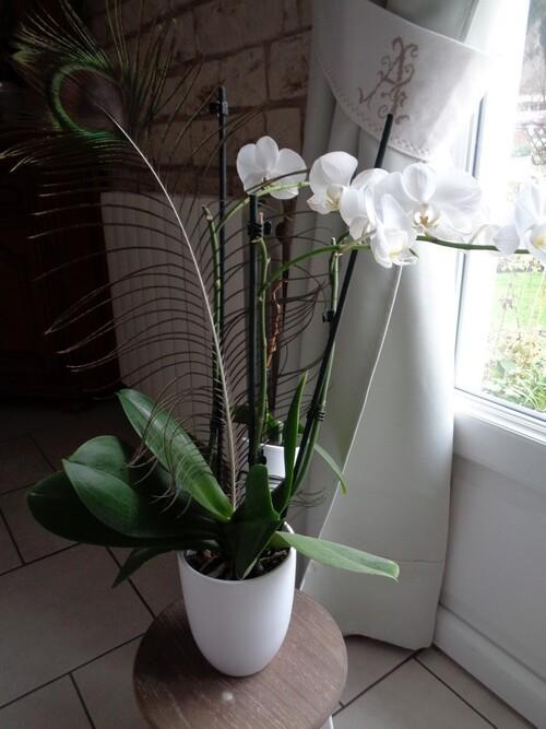 les fleurs et gourmandise du moment
