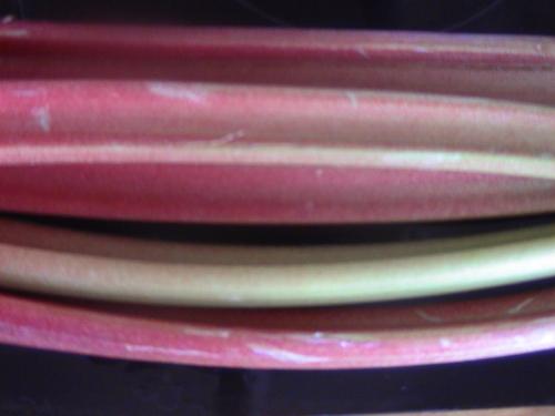 La rhubarbe ...