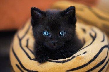 Mignon, Mammifères, Cat, Portrait