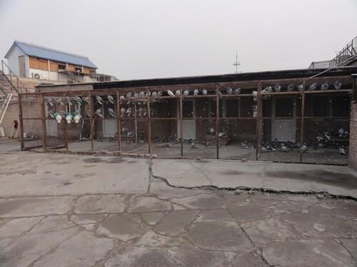 Jour 11: la Colombophilie à Pékin