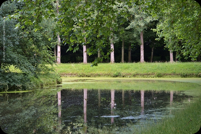 Rambouillet : Reflets