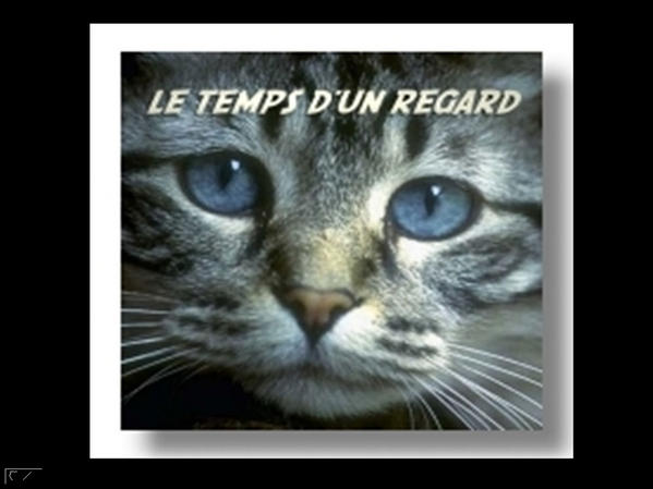 Divers yeux d' animaux