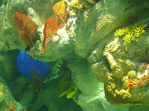 aquarium-piratesvernis-133.JPG