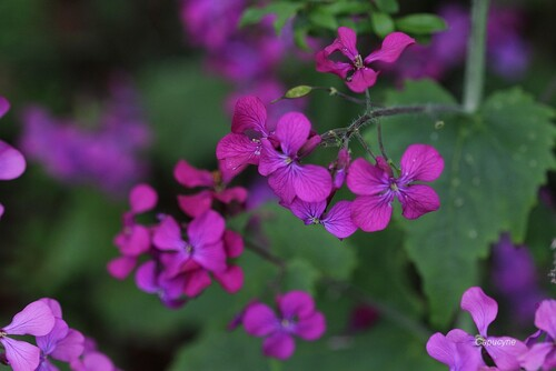 La magie des sauvages au jardin : avril