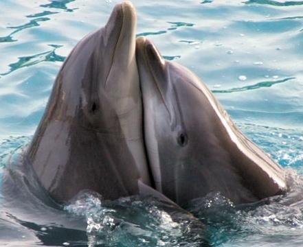 Blog de roselyne : Humanité, Nature,  Amour et lumière, Parle avec Les Dauphins