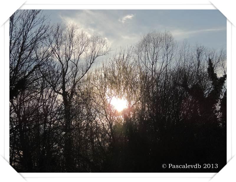 Promenade printanière aux marais de Bruges - 4/6