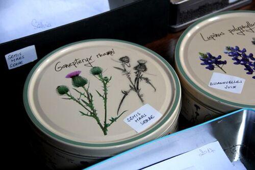 Seeds of Love : on s'organise avant les semis