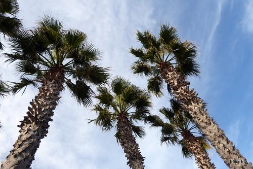 Le ciel et les palmiers