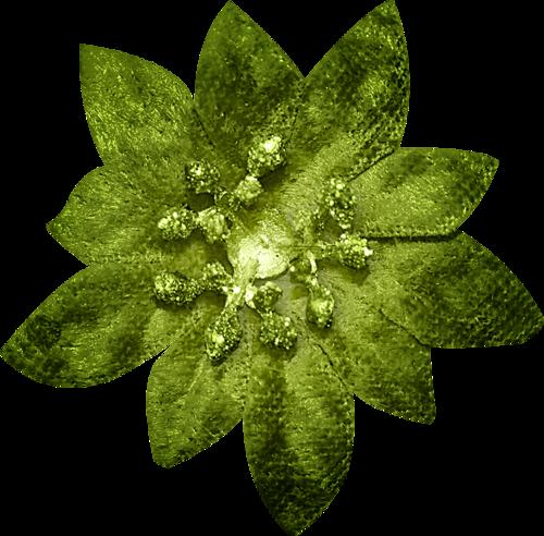Fleur de Noël / 2