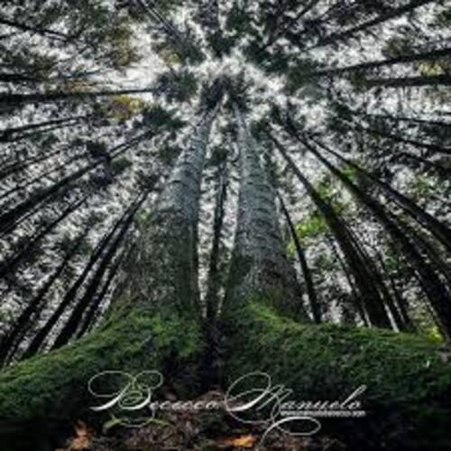 Les forêts à travers l'oeil de Manuelo Bececco