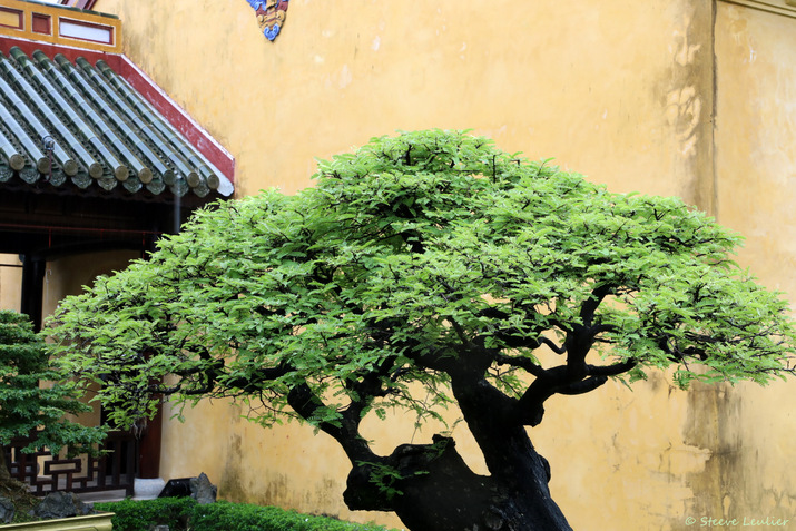 Cité impériale : la cité pourpre interdite, le jardin Thieu Phuong