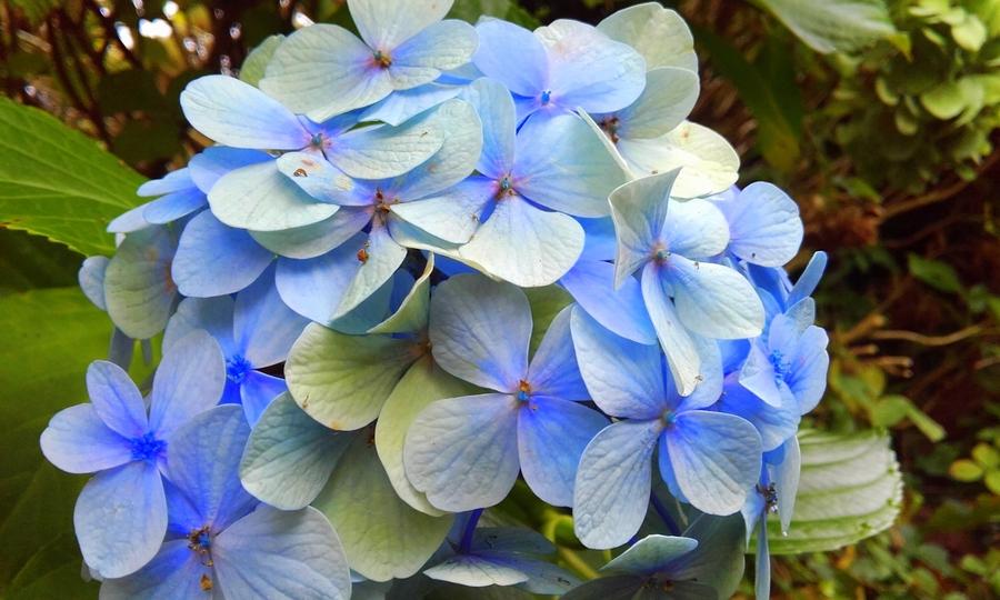 c'est jeudi vrac  en bleu estival
