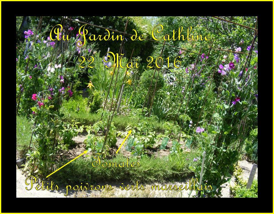 Jardiner avec la lune du 1er au 31 Juin