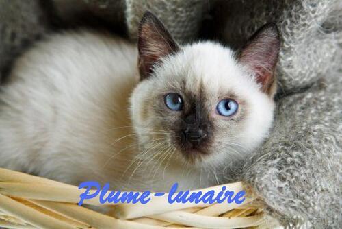 plume-lunaire