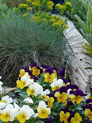 Cornutas---fetuque-bleue-24-04-12-030.jpg