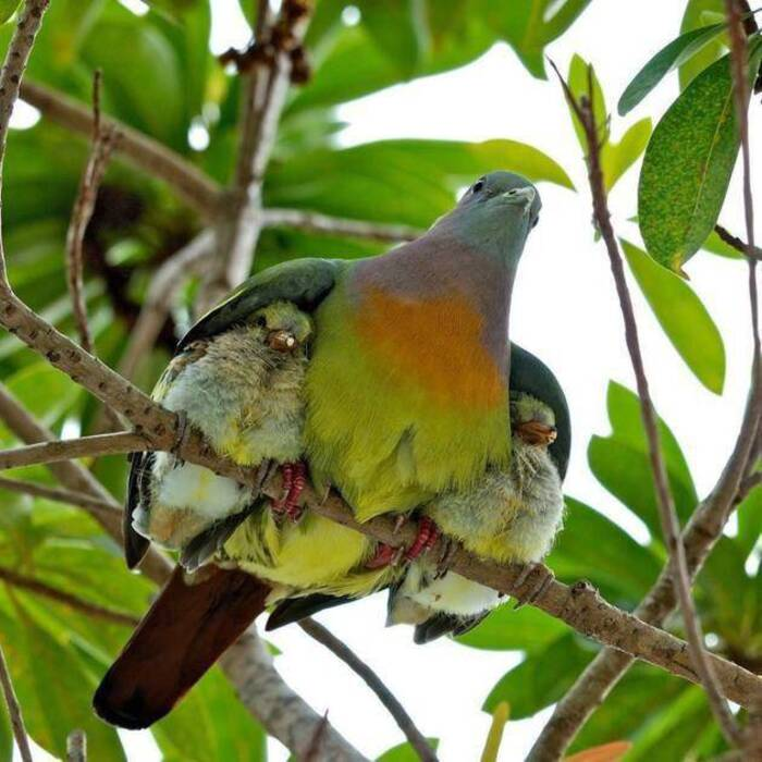 Des images étonnantes prouvant que la nature est cent fois meilleure que Photoshop