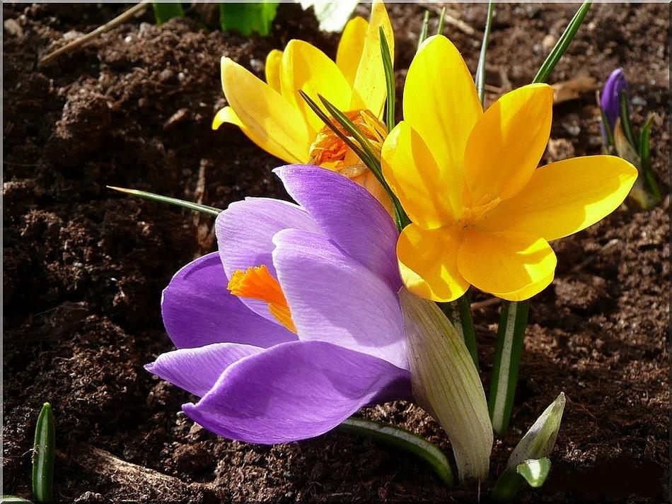 Mes printemps ...