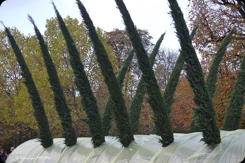 "Jardin des Tuileries : FIAC 2017 : ""Serre Cyprès Florence"" Patrick Saytour (1987)"