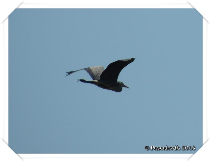 Printemps à la réserve ornitho du Teich - 9/16