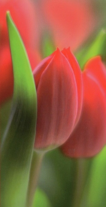 fleurs131