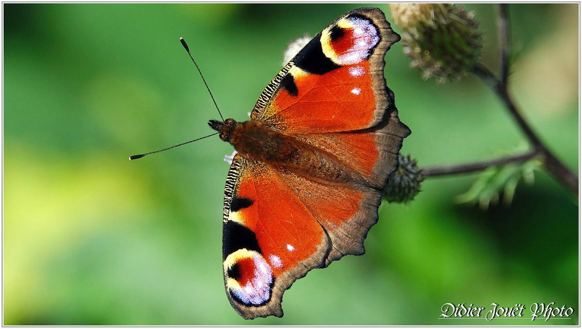 Méli-Mélo (2) - Papillons