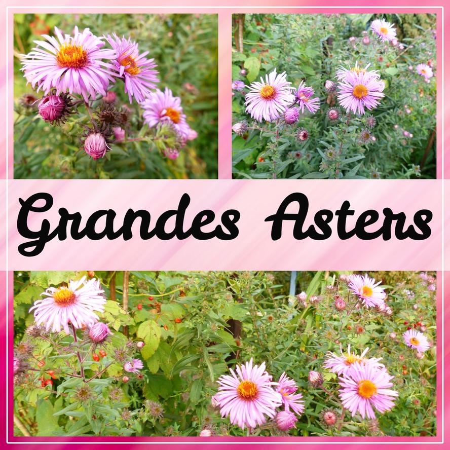 Beautés florales