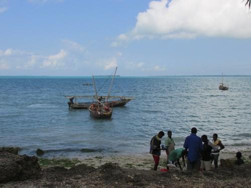 Zanzibar - Chwaka bay