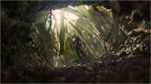"""#24 Une journée avec... """"Ant-man"""""""