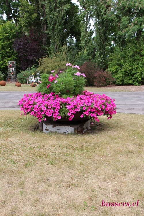 fleurs et plante de l'école agricole de liège