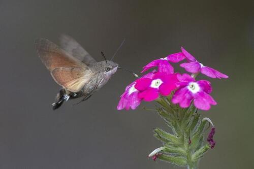 un drole de papillon