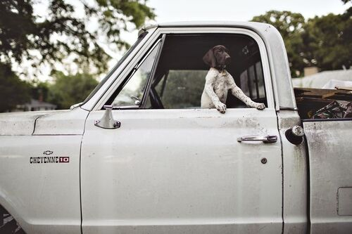 02 - Dogs and car, colors