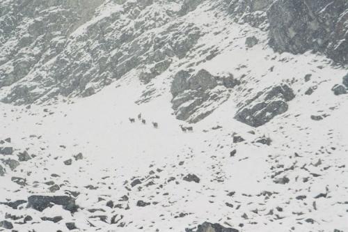 Le recul du glacier des Bossons