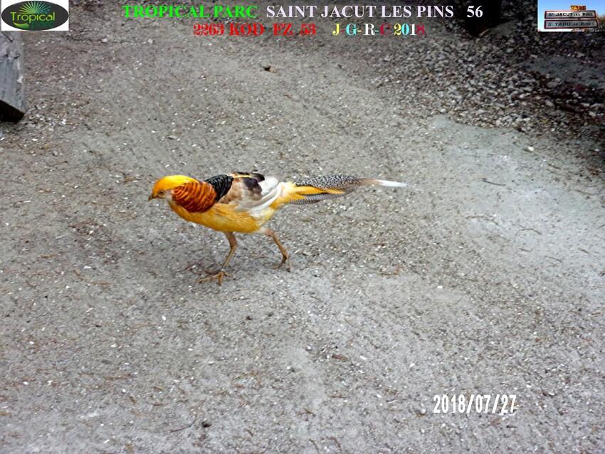 TROPICAL PARC:  Oiseaux  2/2     D   08/10/2018