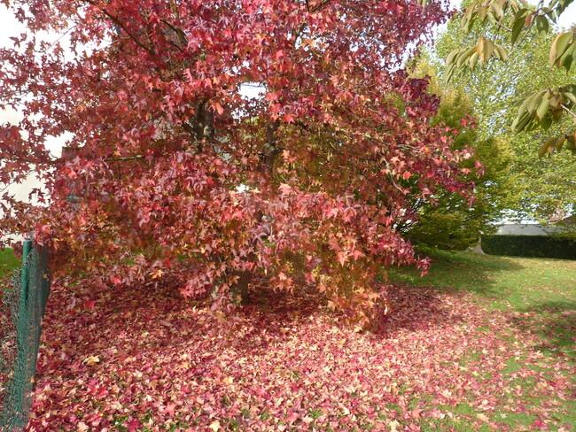Quelles feuilles d'automne