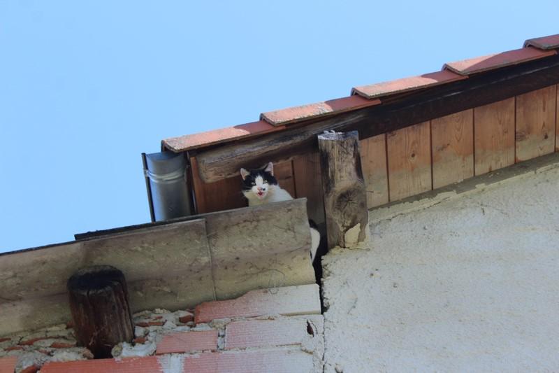 Sous le toit